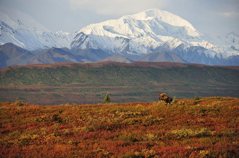 Tundrlandschaft mit Alaska-Range, © Thomas Sbampato
