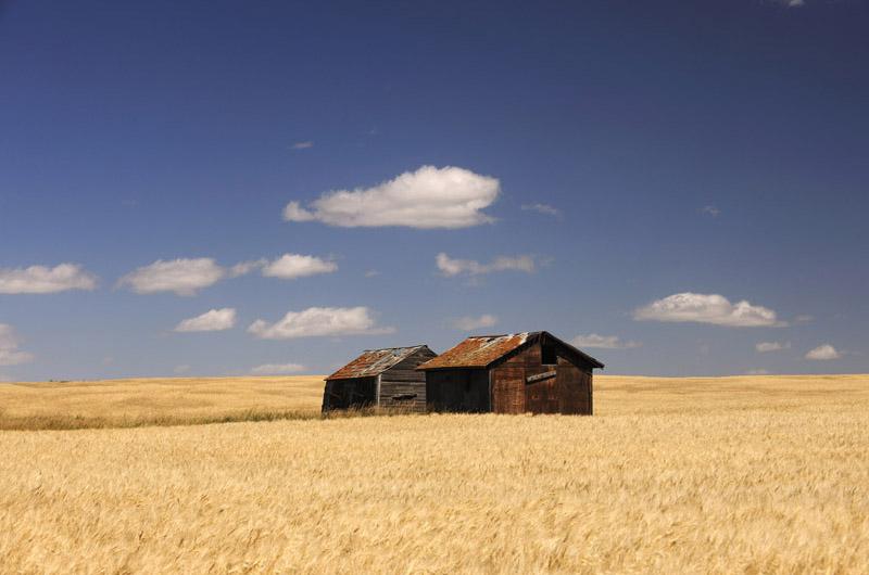 Weizenfeld in der Prärie, © Thomas Sbampato