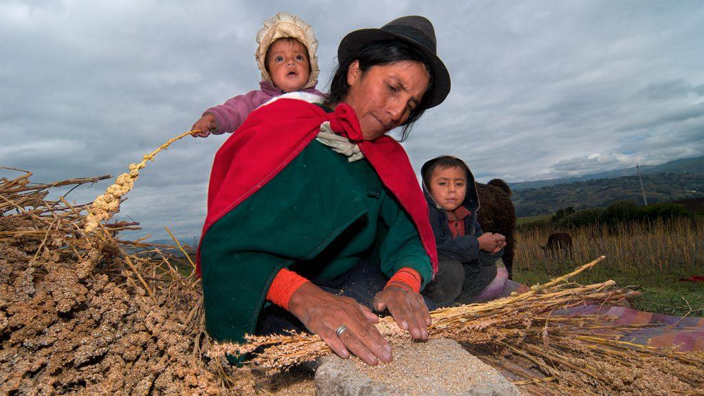Bei der Quinoa-Ernte in der Comunidad Quinua Ñan