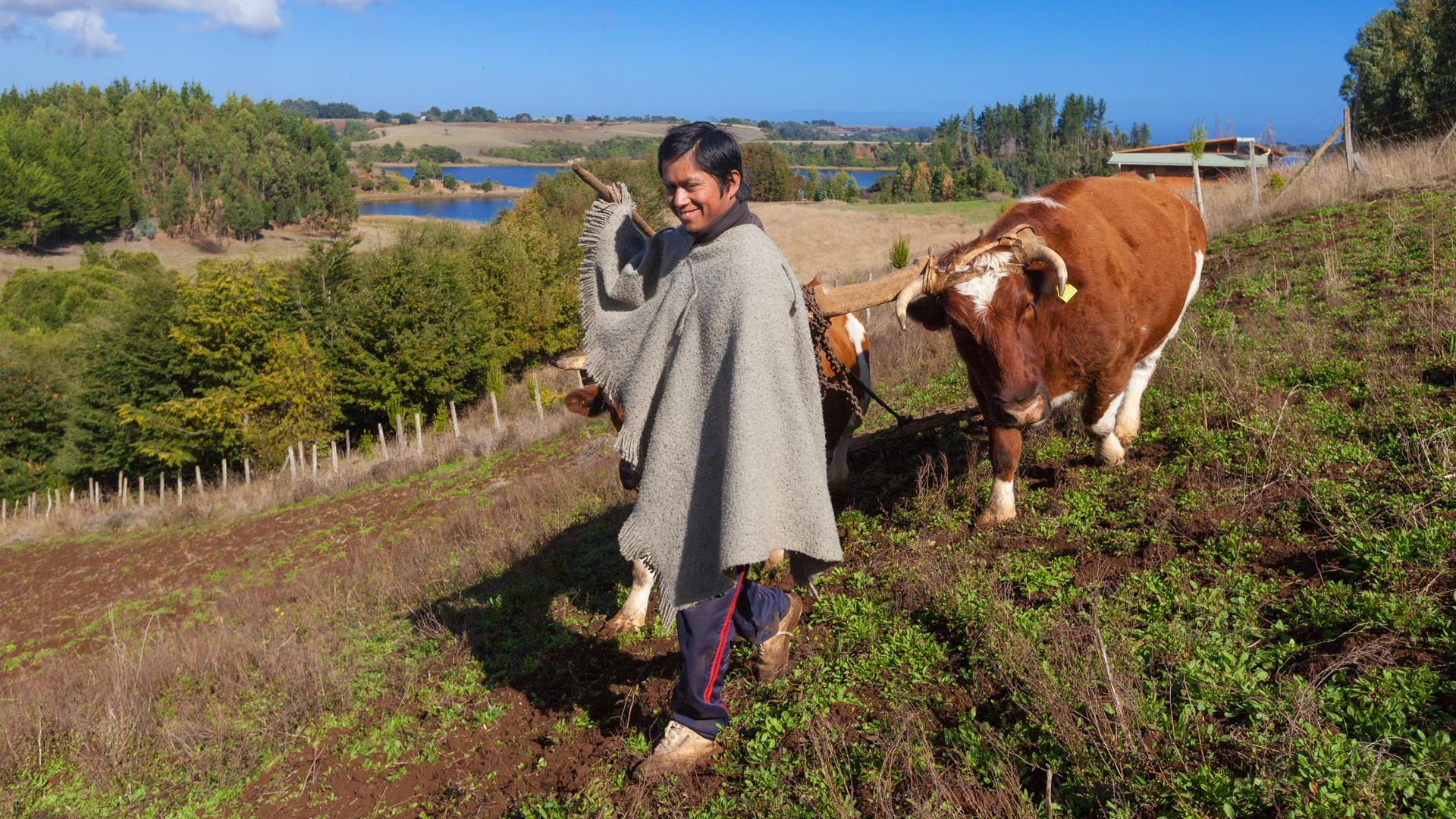 Der Mapuche Sayen Nehuen beim Pflügen