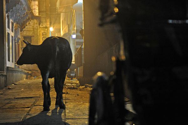 nächtliche Gasse, Varanasi, Uttar Pradesh