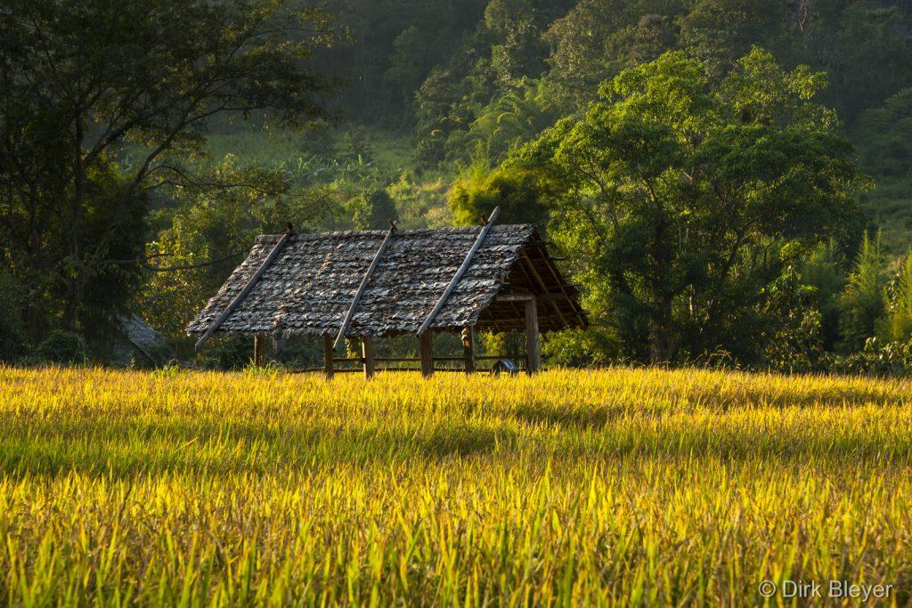 Reisfelder in Nordthailand