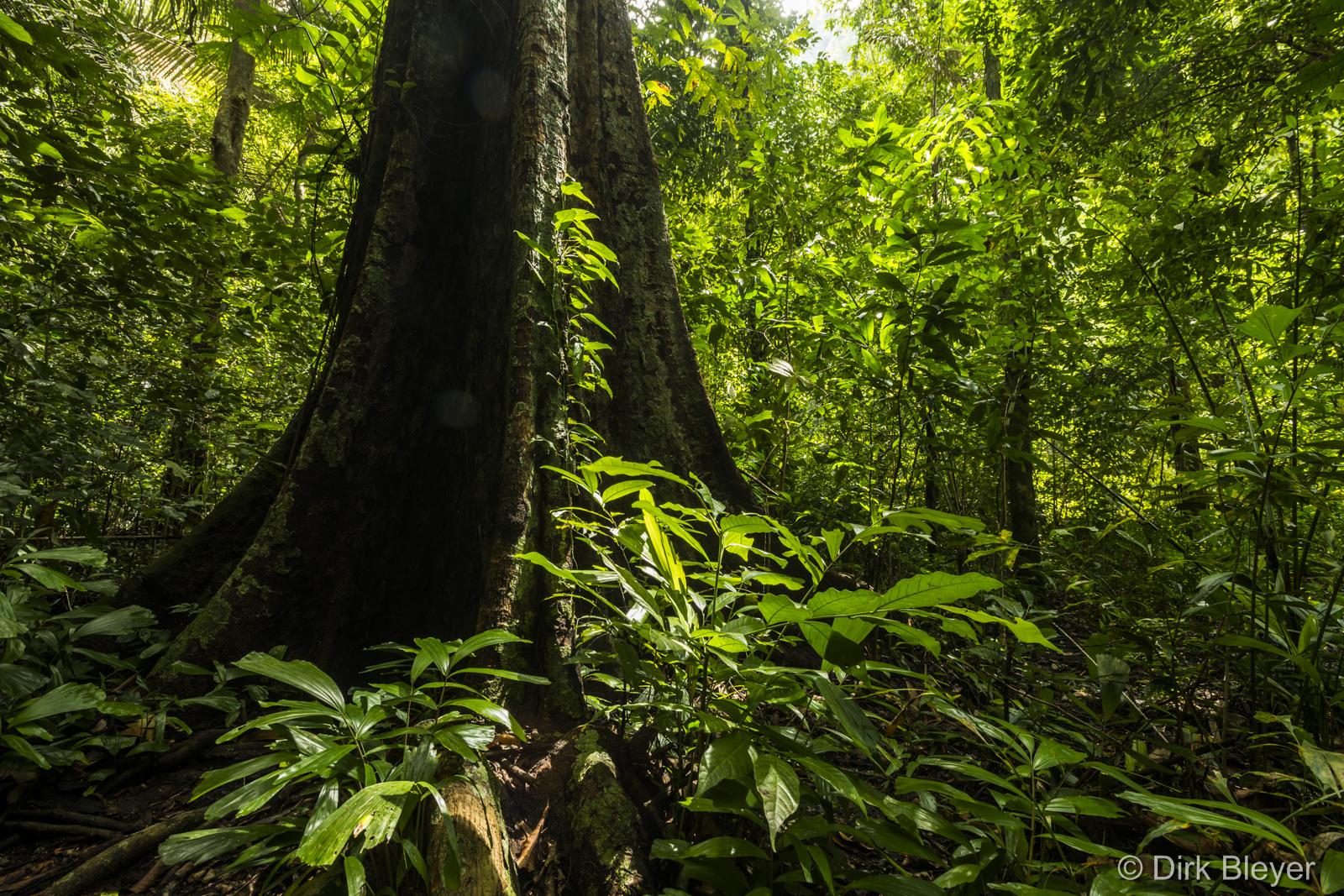 Nationalpark in Phang Nga Bay