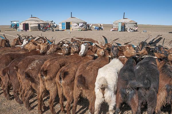 Mongolei_Nomaden in der Gobi