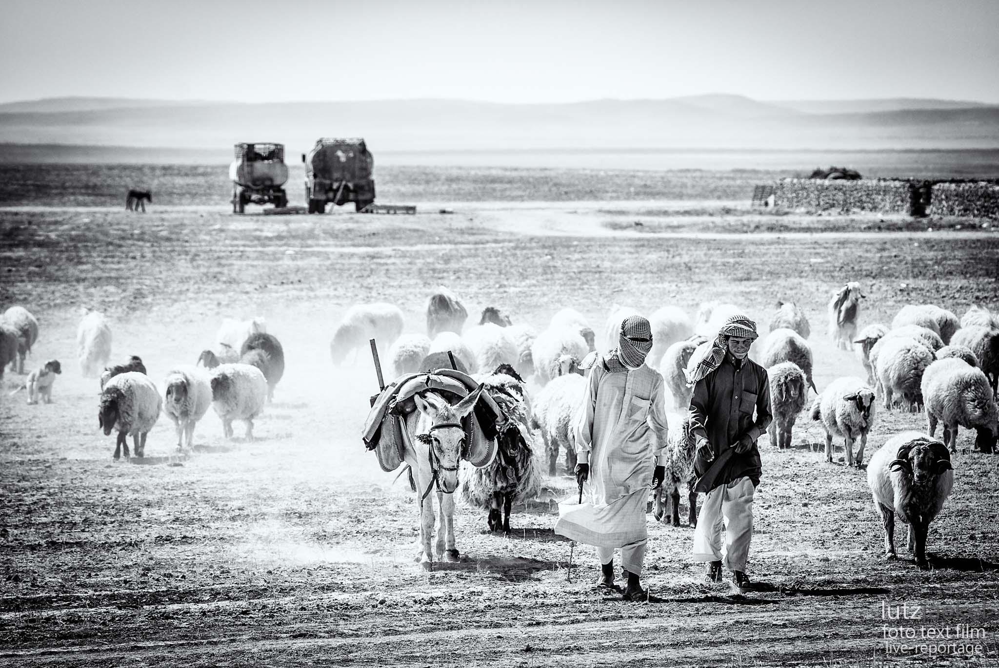 Syrien: Wuestensteppe
