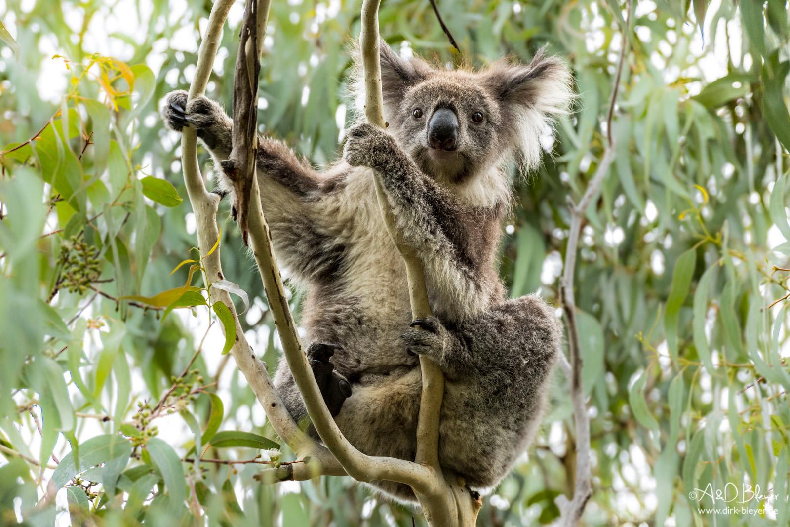 Australien - ein Jahr Freiheit © Dirk Bleyer