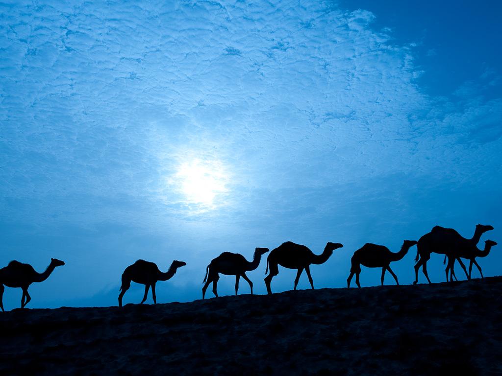 @ Hardy Fiebig, Oman & Emirate